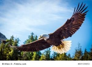 Der Adler, der den Überblick behält.